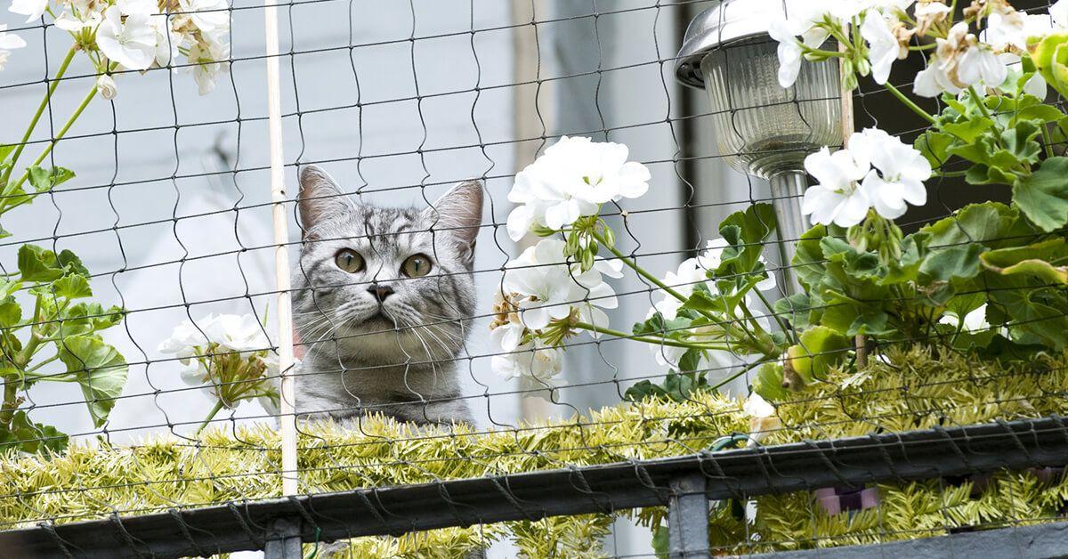 zabezpieczenie okna przed kotem