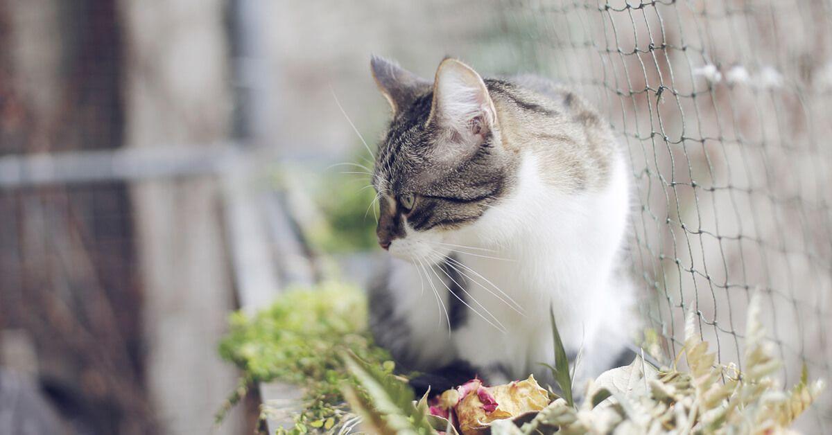 jak zabezpieczyć balkon przed kotem
